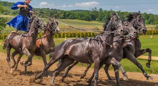 wisata berkuda di Lampung